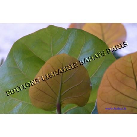 Carte Prière de Bahá'u'lláh 'Vous êtes les fruits d'un même arbre...'